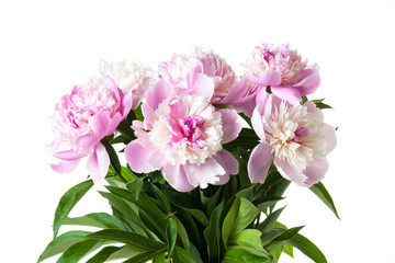 Bouquet of beautiful soft pink peony flowers. Floral motif wallpaper
