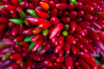Red hot chilly pepers closeup background