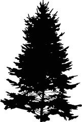black fir high tree isolated silhouette illustration