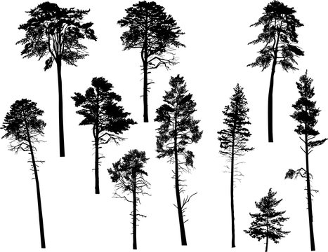 ten swamp pine silhouettes isolated on white