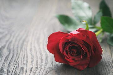 single dark red rose on wood background, vintage toned photo