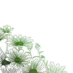 Daisy flowers on a green background, outline drawing.