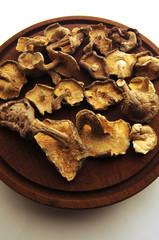 Fungi Linnaeus 1753