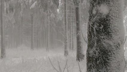 Wald im Winter mit Schnee