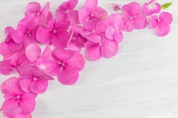 bunch of hortensia pink flowers