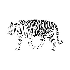 black and white tiger, isolated wild animal vector illustration