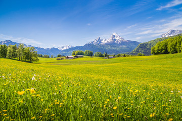 Wall Mural - Idyllic landscape in the Alps with blooming meadows in summer