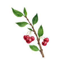 cherry tree branch with leaves and berries