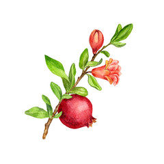 fruit tree branch with leaves,flower and pomegranate