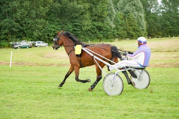 Trabrennen - Pferd mit Jokey auf der Bahn in Aktion, Aufwärmrunde
