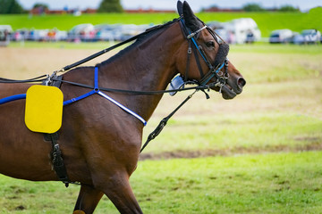 Trabrennsport - Pferd auf der Rennbahn, Nahaufnahme