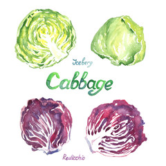Cabbage variety set: Rediccio, Iceberg, isolated hand painted watercolor illustration