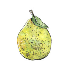 hand drawn watercolor isolated green pear on white background