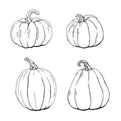 hand drawn set of graphic pumpkins on white background