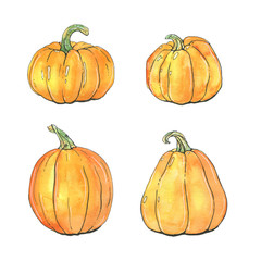 hand drawn set of watercolor pumpkins on white background