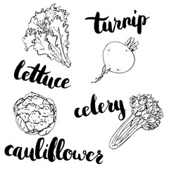 hand drawn set of graphic vegetables turnip cauliflower lettu