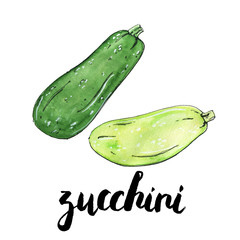 hand drawn watercolor vegetables zucchini with handwritten words