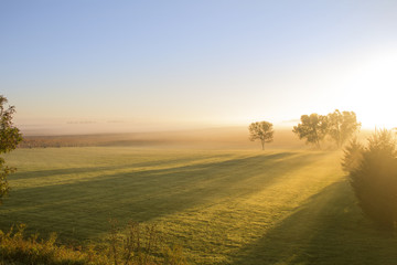 Long Shadows in Grassy Field