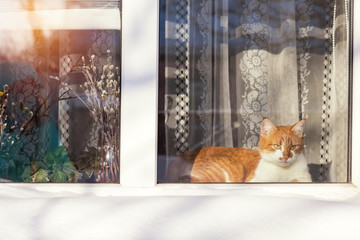 Red and white cat on the windowsill in the home. Sunshine winter day. The view from the street. Cozy home concept.