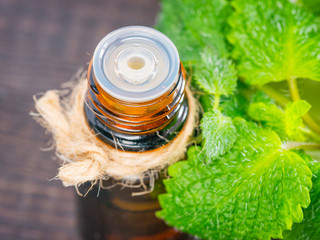 melissa or mint essential oil