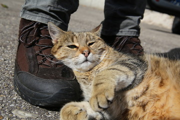 Tabby cat lying on a hiking boot