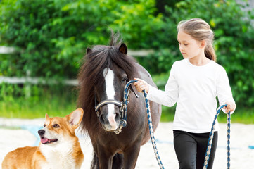 child and ponies and dog for a walk
