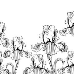 flower, iris, nature, floral, plant, vector, summer