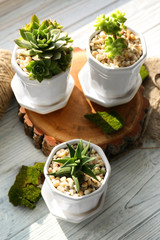 Beautiful composition of houseplants on wooden background, closeup