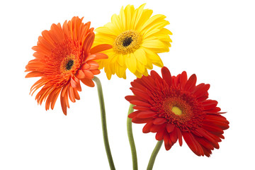 Bouquet of flowers gerberas isolated on white background