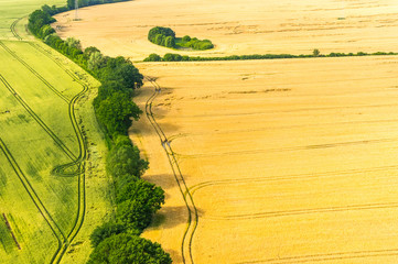 Luftbild eines Getreidefeldes mit Sturmschäden und Wilschäden