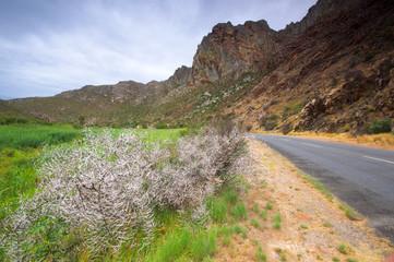 Scenic near Montagu, South Africa