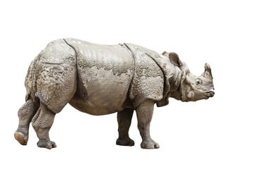 Indian rhinoceros (Rhinoceros unicornis)- isolated