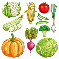 Farm vegetables vector sketch isolated icons set