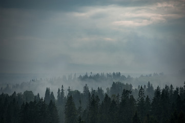 Poster Morning with fog Mountain forest covered by fog