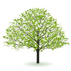 新緑 木 葉 アイコン