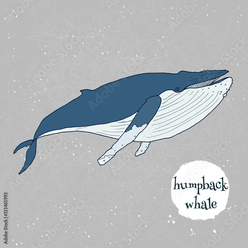 """""""Humpback whale vector illustration. Hand drawn, isolated ..."""