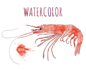 Watercolor shrimp with splashes on the white background. Hand-drawn isolated food illustration. Seafood and marine cuisine.