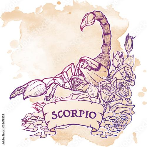 Zodiac sign Scorpio  Detailed realistic scorpio in a