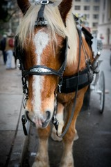 Horse With Buggy Carriage (San Antonio, Texas)