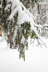 tree branches in snow