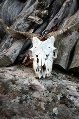 Skull of a goat on a Rock with wood in the background