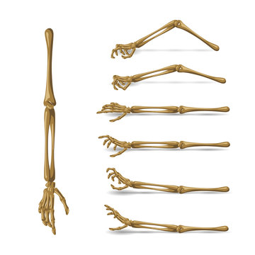 Bone hand set on white background