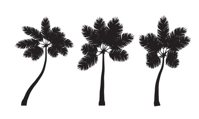 coconut trees set vector illustrations