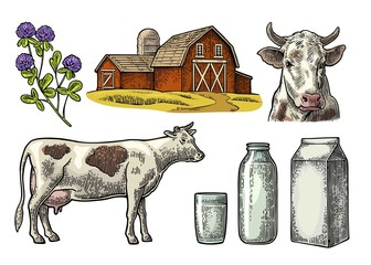 Set Milk farm. Cow head, clover, box carton package, glass and bottle.