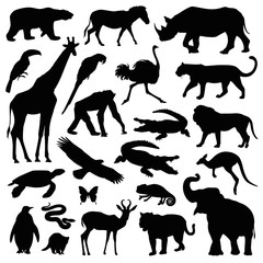 zoo animal illustration set