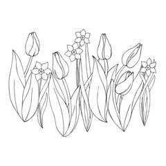 vector monochrome contour illustration of daffodil narcissus  tulip flower