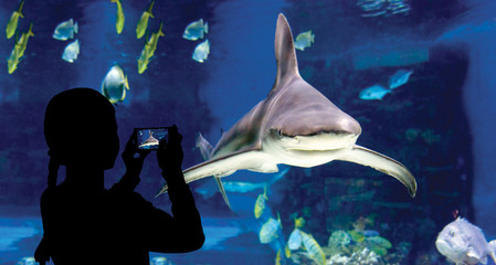 The child makes the photo shark swimming in oceanarium
