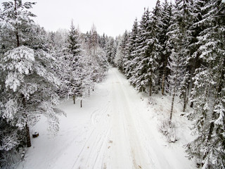 aerial view of winter forest from drone