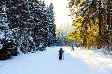 Дети едут на лыжах по зимнему лесу