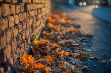 Herbstllaub